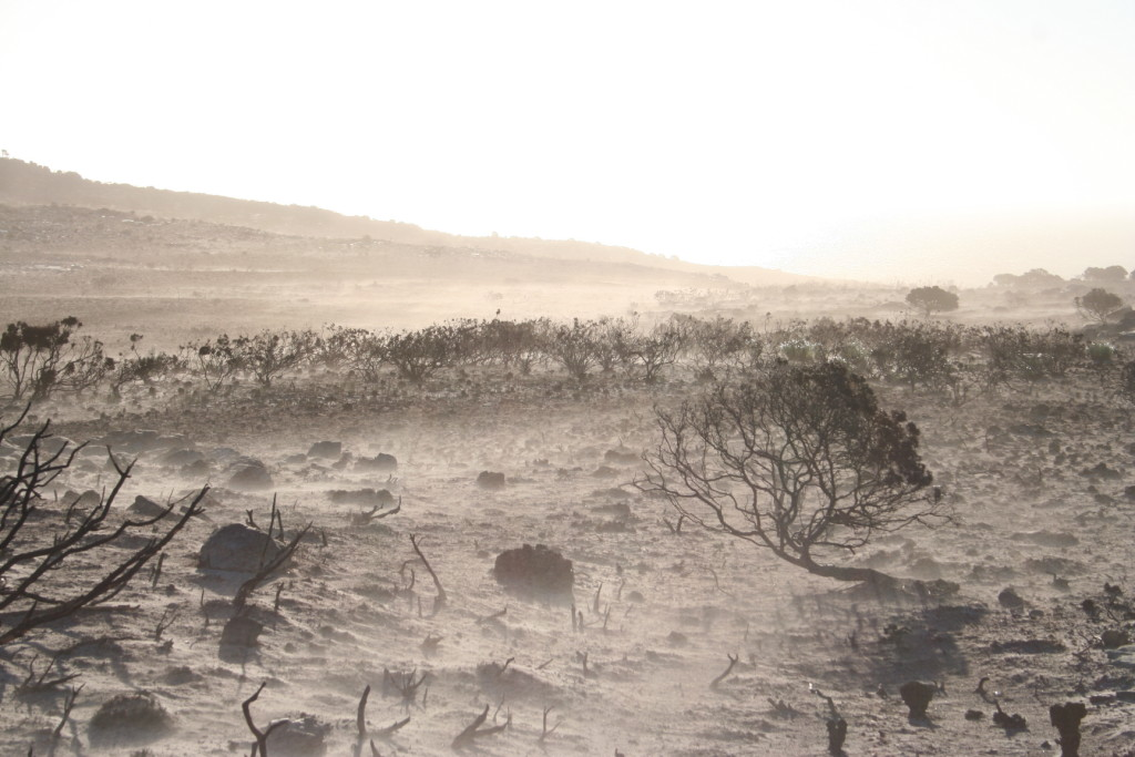 Figure 2. The aftermath: ash, sand and blackened skeletons of shrubs.