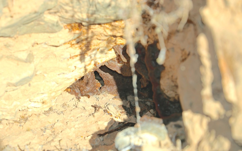 Fig. 2b. Propolis walls covering the entrance to a wild honey bee nest in an aardvark burrow.